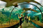 Loro parque tunnel aquarium