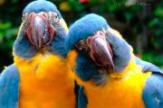 grappige papegaai