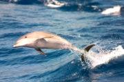 Dolfijn met Maxicat