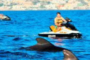 Dolfijnen en jetski