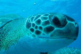 groot schildpad bekijkt je