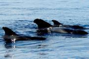 Walvissen Tenerife
