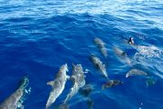 Dolfijnenfamilie